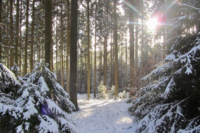 Walking in a Winter Wonderland – Herzberg | Taunus